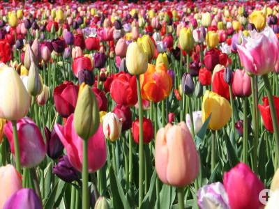 Blumen zum Selbstschneiden