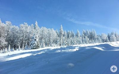 Ski-Club Bad Krozingen e.V. Foto